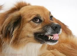 No dejes que tu perra interna se vuelva agresiva.